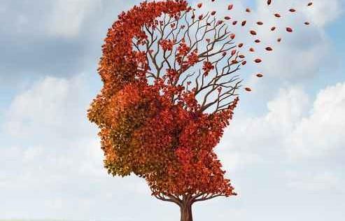 cerebro-otono-45033_493x316